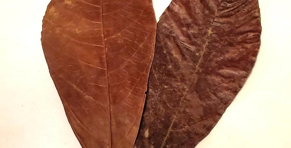 """Cocoa Leaves 6-10"""""""