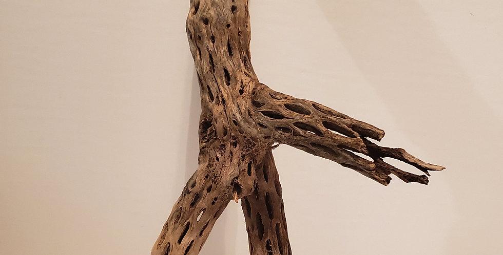 Cholla Wood c6 wysiwyg