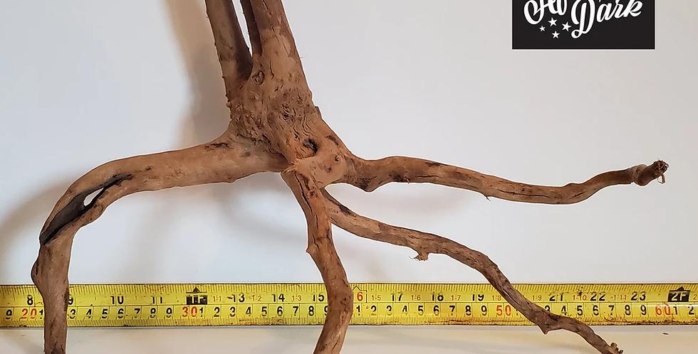 Spiderwood a11 wysiwyg