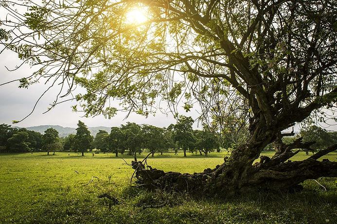 nature-2396002_960_720.jpg