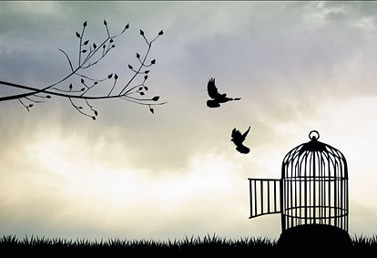 bird escaping cage.jpg