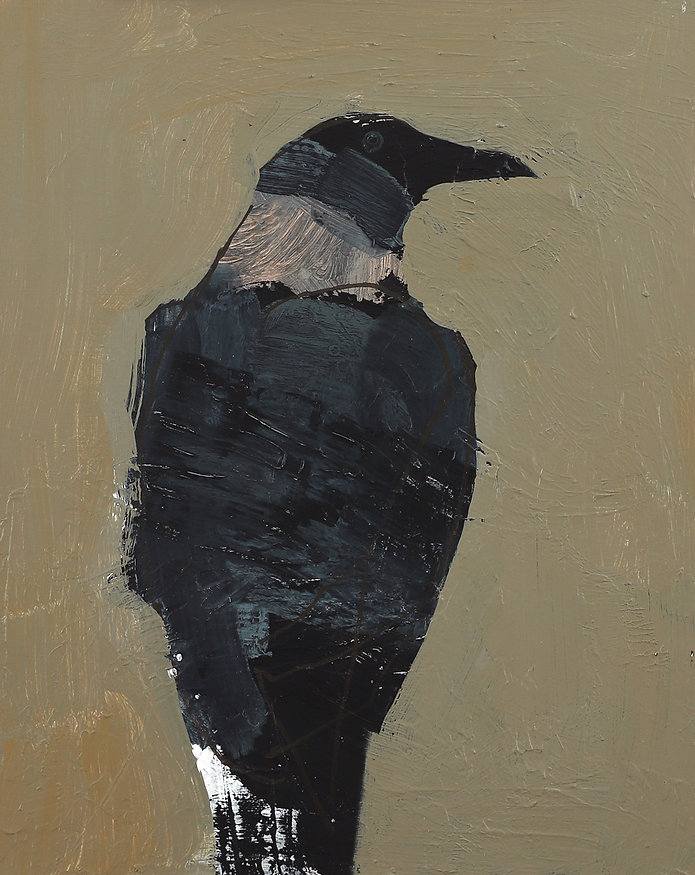 Hooded Crow.jpg