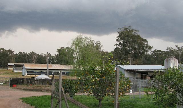 Laymour Poultry Farm