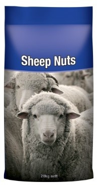 34 Sheep Nuts.jpg
