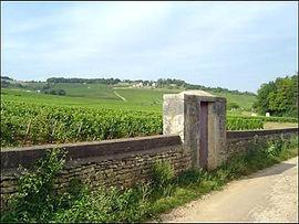 winevinyard.jpg