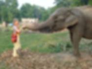 Elefanten Besuch