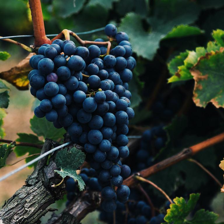 Wine Club Virtual Jan 14th