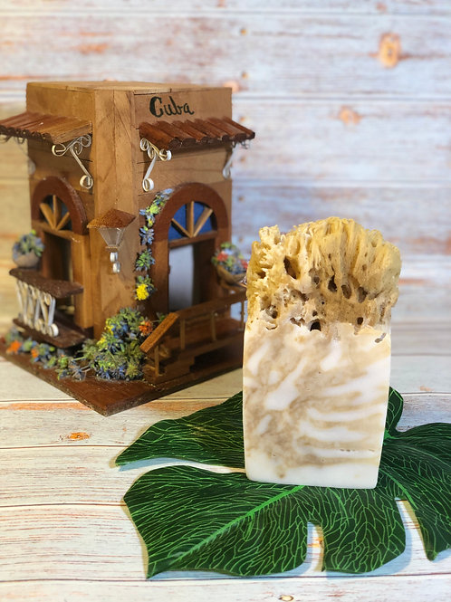 Cayo Coco Sea Sponge
