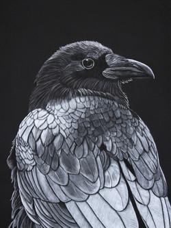 Raven 2014