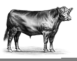 angus cow clipart.png