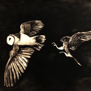 Owl and Kestrel
