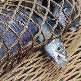 fish in net.jpg