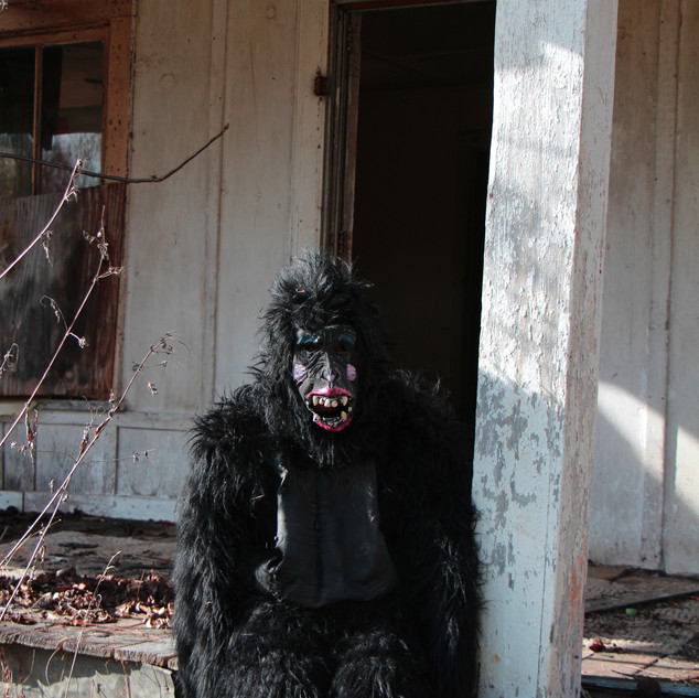 Lonely Ape