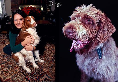 DogsButton.jpg