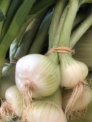 Oignon blanc /Botte