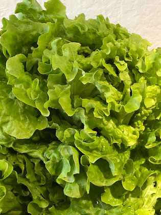 Salade /Unité