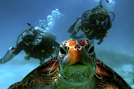 Diving-with-Blue-Dive-2014-1030x903.jpg