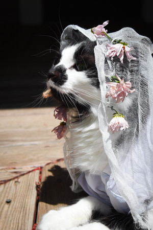 bridal .jpg