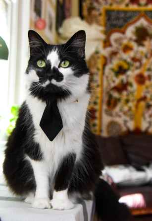 salvo black tie.jpg
