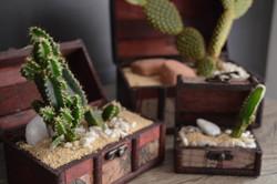 Jogo de Baús com cactus