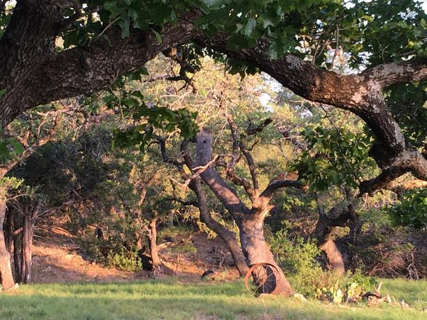 Avalon Oaks