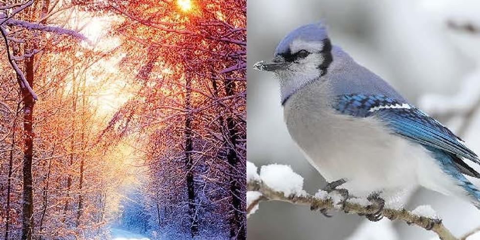 Winterspecial 2    do 28 januari '21 - Lunch (Roerdomp)