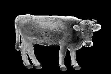 vache marque.png