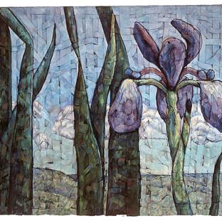 Iris at Middle River, Cape Breton, NS