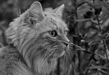 Chat à l'affut
