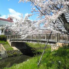 Shimizu Ryokuchi Green Park