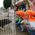 新検見川保育園ふれあい動物園