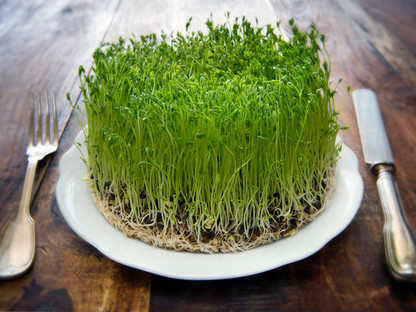 Grow Nutritious Sprouts At Home with Effective Microorganisms
