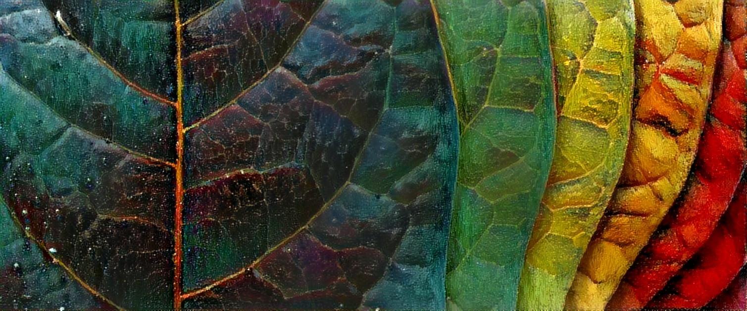 2013.06.나뭇잎#636.jpg