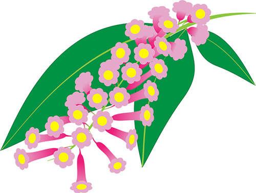 National Flower of SVG