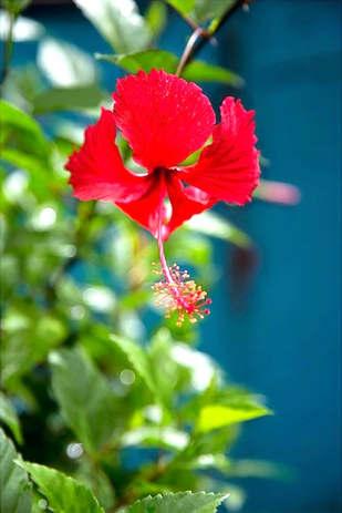 flower_edited.jpg