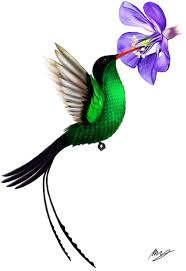National Bird of Jamaica