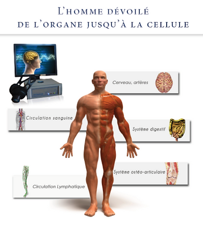 physioscan image.png