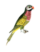 parrot-1525817_1920 without stick.png