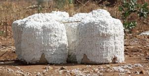 Commerce/Afrique: Production cotonnière au Cameroun,bilan satisfaisant?