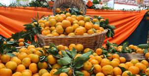 Commerce:Les agrumes du Zimbabwe bientôt sur le marché chinois
