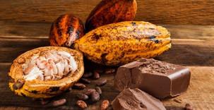Commerce/Afrique: Le Cameroun va labeliser son cacao