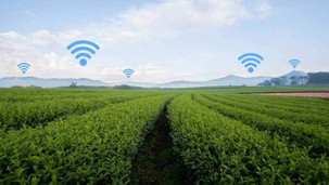 Commerce/Afrique: Rwanda - une plateforme pour booster la production de pomme de terre