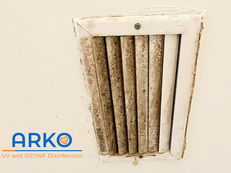 The Ultimate Guide to Mold Contamination Prevention