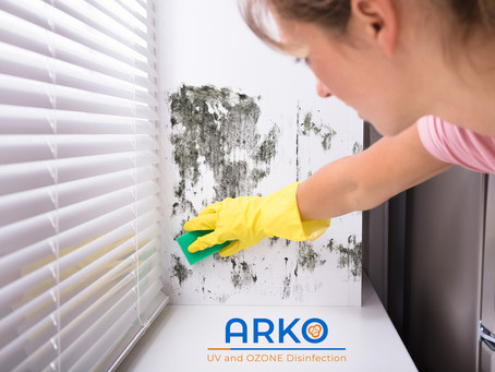 Where to Check For Mold in Your House and How to Avoid Mold?