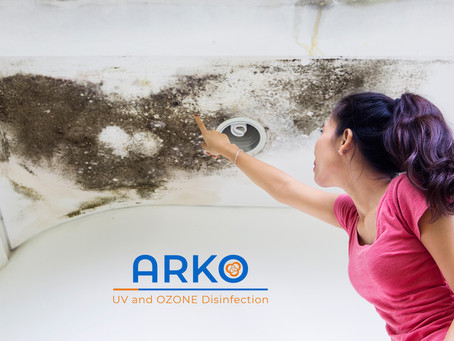 Places to Check for Mold in Your Home