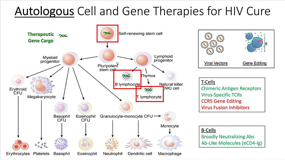Autologous-Cell-and-Gene-Therapies-for-H