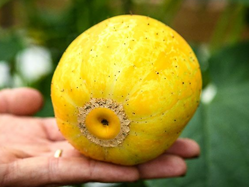 Lemon Cuke Cucumber