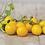 Thumbnail: Hartman's Yellow Gooseberry Cherry Tomato