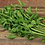 Thumbnail: Parsley Herb