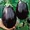 Thumbnail: Black Beauty Eggplant